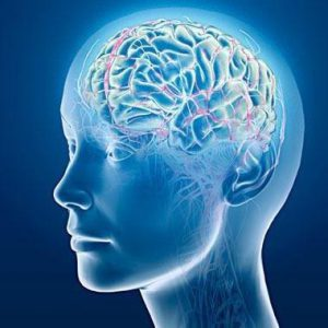 Adhd Real Brain Disorder Or Further >> The Science Of Adhd Chadd